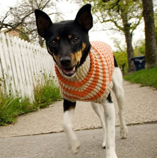Top Five orGLAMic Dog Accessories