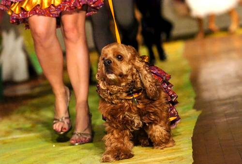 Haute Benefit: 4th Annual Doggie's on the Catwalk