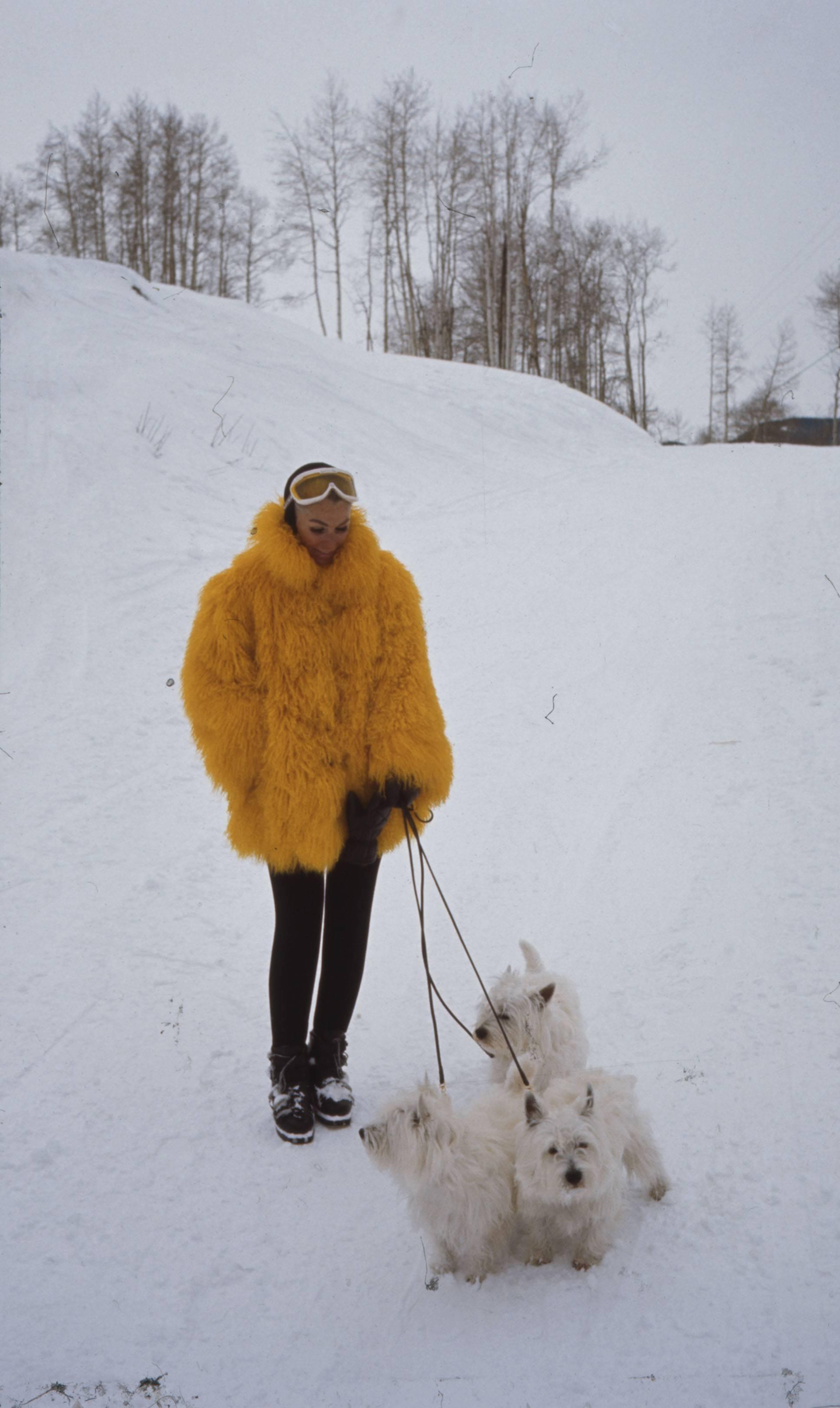 TF LOC Yellow Jacket