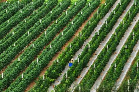 Moët-Hennessy Invests In China Vineyard To Produce Red Wine