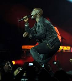 Seal photos: Denise Truscello/Palms