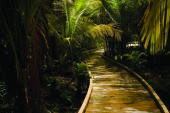 Nature_boardwalk_trail