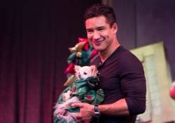 Mario Lopez-Rose.Rabbit.Lie. April 2014