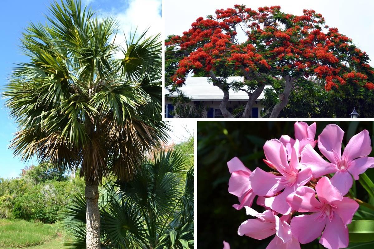 Bermuda Flora