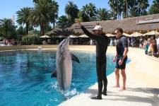 The Mirage - Trainer For A Day - Dolphin Tail Walk